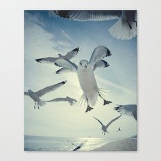 Seagull {Four} Canvas Print