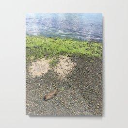 Coastal Algae Metal Print