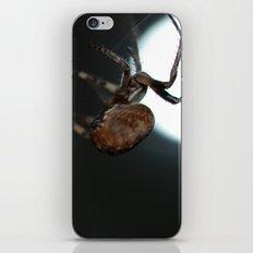 Full Moon Spider iPhone & iPod Skin