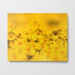 Yellow Daisy Print Metal Print
