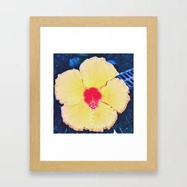 serie Hibiscus I Framed Art Print