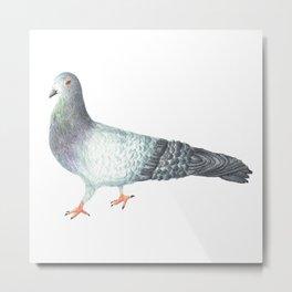 Pete the Pigeon Metal Print