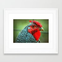 rooster Framed Art Prints featuring Rooster by Nichole B.