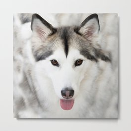 Cute Husky Metal Print