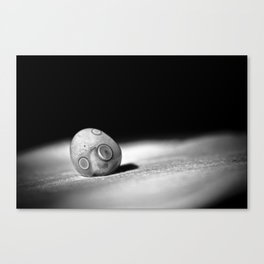 all that we fall for Canvas Print