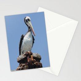 Peruvian pelican (Pelecanus thagus) Stationery Cards