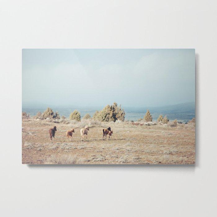 Oregon Wilderness Horses Metal Print