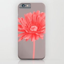 Pink Gerbera blossom grey background iPhone Case