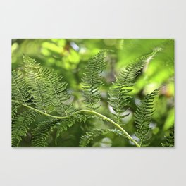 The Lively Ferns Canvas Print