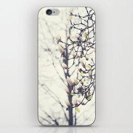 Magnolia Tree iPhone Skin
