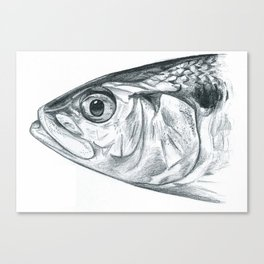 Portrait of a shad Canvas Print