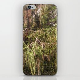 Woolly Spruce iPhone Skin