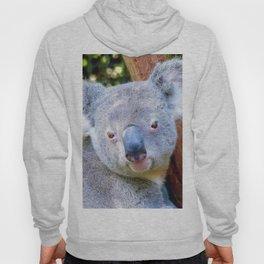 Extraordinary Animals- Koala Hoody