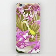 Caper Flower Blossom iPhone & iPod Skin