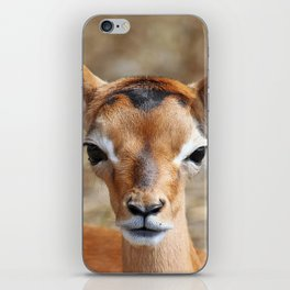 Very young Impala - Africa wildlife iPhone Skin