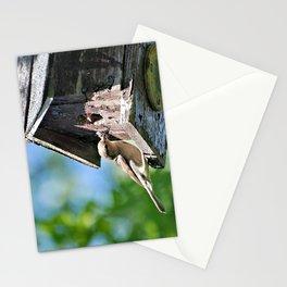 Tasty Bite for Baby Bird Stationery Cards