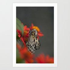 Wings of Nature Art Print