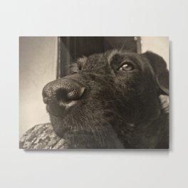 Skeptical Dog Metal Print