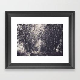Tunnel of Trees - Kauai, Hawaii Framed Art Print