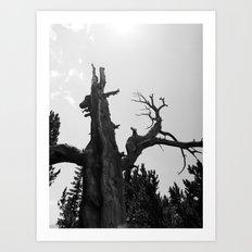 tree film Art Print