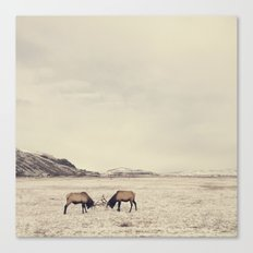 Sparring Elk in Wyoming - Wildlife Photography Canvas Print