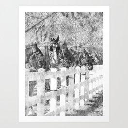 A Line of Amish Horses Art Print