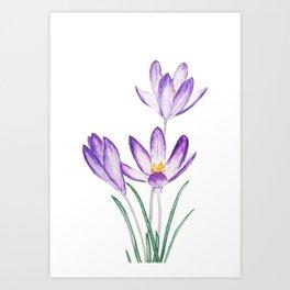 purple botanical crocus flowers Art Print
