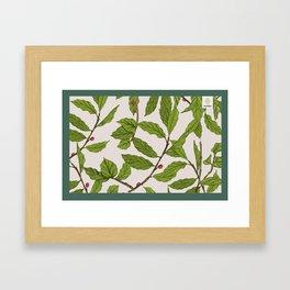 Toraja Sesean Coffee Plant Framed Art Print