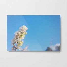 Blue Blossom Metal Print