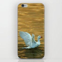 White duck on golden pond iPhone Skin