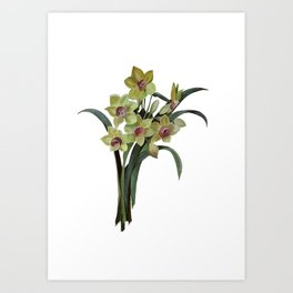 Lent Lily Isolated Art Print