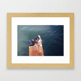 Juvenile Herring Gull Framed Art Print