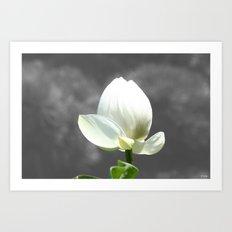 Pure Flower Art Print