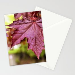 Canada Day Red Maple Leaf by Reay of Light Stationery Cards