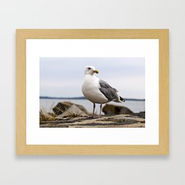 Beautiful Seagull of the Baltic Framed Art Print