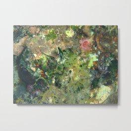 Underwater 6 Metal Print