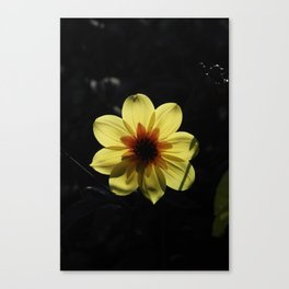 Yellow wind rose Canvas Print