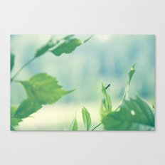 lil bug Canvas Print