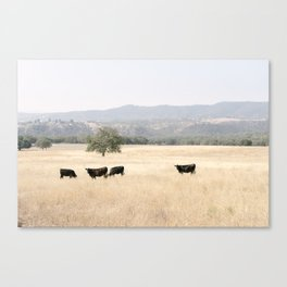 The Fields of Paso Robles - California Wine Country Canvas Print