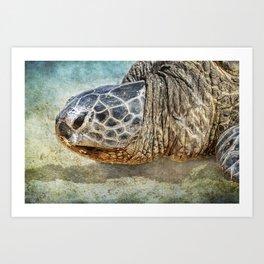 Green Sea Turtle Portrait Art Print