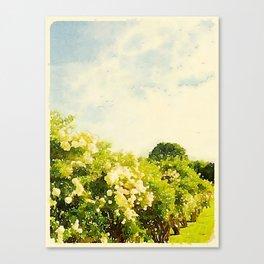 Hydrangea Bushes, Kennebunkport, Maine Canvas Print