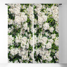 Beautiful white aromatic flowers in Mexico Blackout Curtain