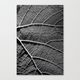 Leaf in black and white Canvas Print