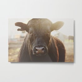 Angus bull Metal Print