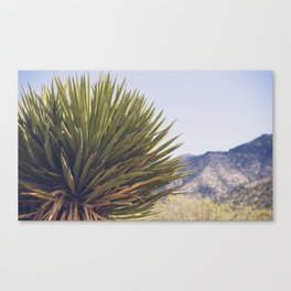 Scenes from the West Canvas Print