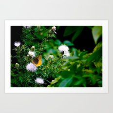 Old Style Butterfly  Art Print