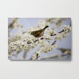 A Bird Perching on a Twig Metal Print
