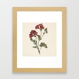 M. de Gijselaar - Red Flower (1830) Framed Art Print