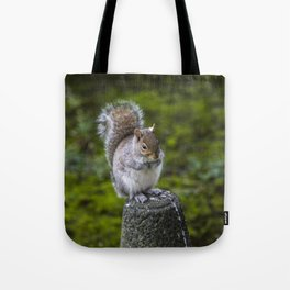 The Chubby Squirrel Tote Bag