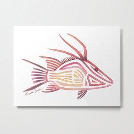 Hogfish Metal Print